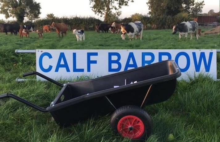 calf barrow
